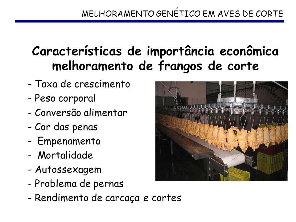MELHORAMENTO GENÉTICO EM AVES DE CORTE - Taxa de crescimento - Peso corporal - Conversão alimentar - Cor das penas - Empenamento - Mortalidade - Autos