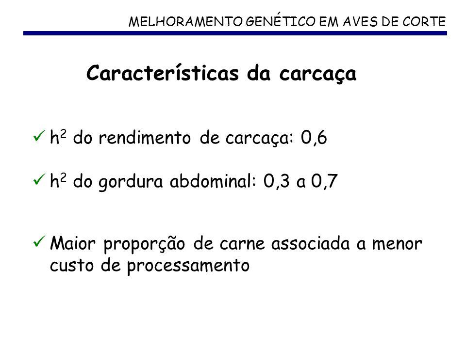 MELHORAMENTO GENÉTICO EM AVES DE CORTE h 2 do rendimento de carcaça: 0,6 h 2 do gordura abdominal: 0,3 a 0,7 Maior proporção de carne associada a meno