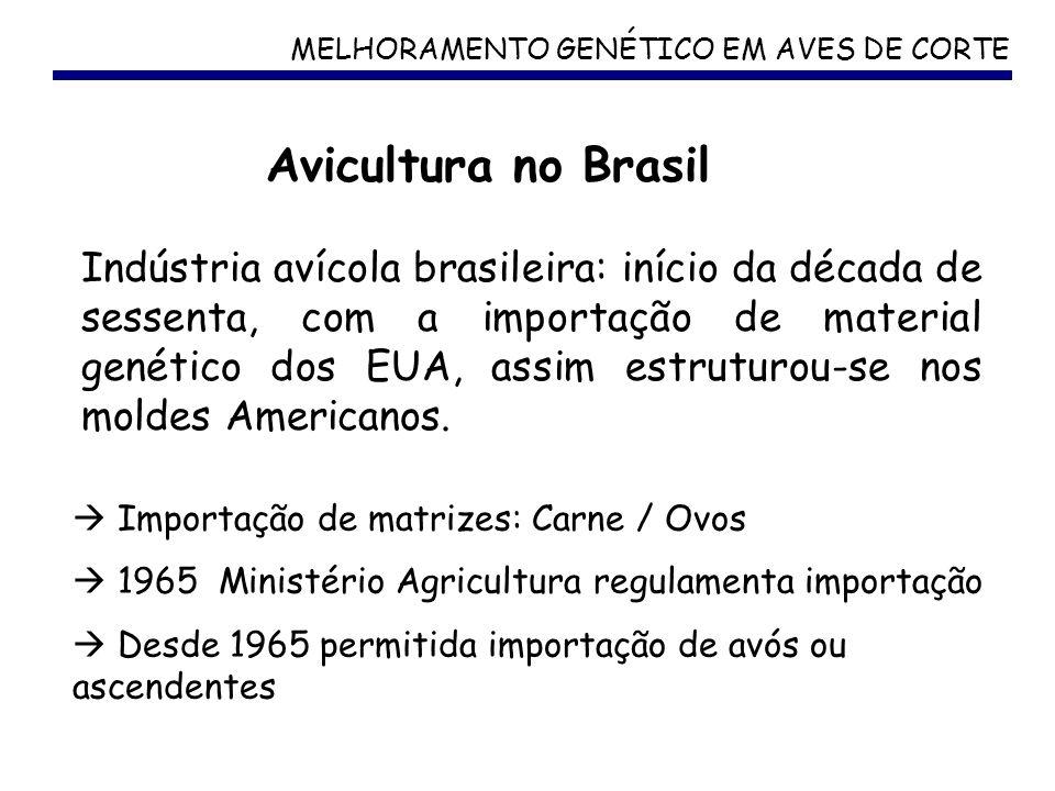 MELHORAMENTO GENÉTICO EM AVES DE CORTE Avicultura no Brasil Indústria avícola brasileira: início da década de sessenta, com a importação de material g
