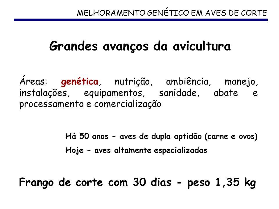 MELHORAMENTO GENÉTICO EM AVES DE CORTE Áreas: genética, nutrição, ambiência, manejo, instalações, equipamentos, sanidade, abate e processamento e come
