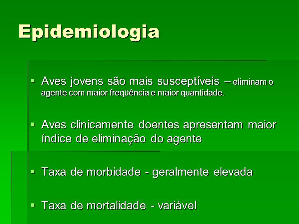 Diagnóstico Exame Clínico Exame Clínico Exames complementares* Exames complementares* RX RX Hematológico (Leucocitose - heterofilia, basófilia e monocitose) (anemia) Hematológico (Leucocitose - heterofilia, basófilia e monocitose) (anemia) Bioquímicos - AST, LHD, CK Bioquímicos - AST, LHD, CK Obs- Não há alterações patognomonicas sendo apenas sugestíveis da doença Hepatomegalia- um dos sintomas de Clamidiose