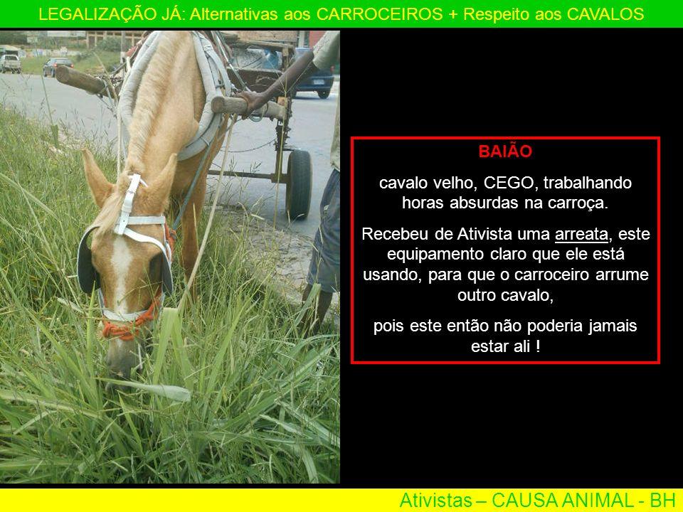 Ativistas – CAUSA ANIMAL - BH LEGALIZAÇÃO JÁ: Alternativas aos CARROCEIROS + Respeito aos CAVALOS BAIÃO cavalo velho, CEGO, trabalhando horas absurdas