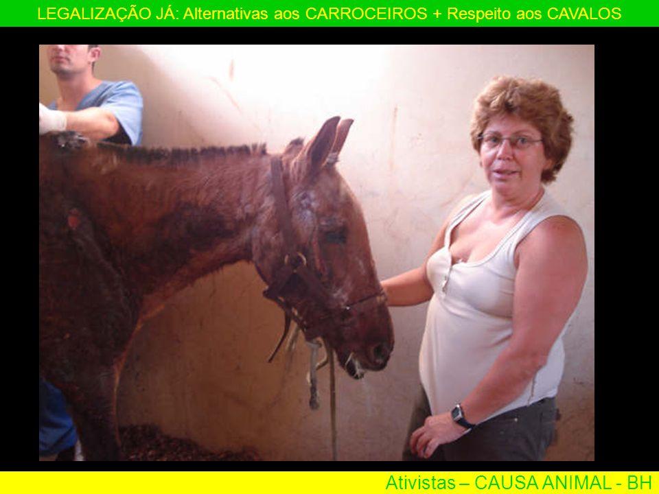 Ativistas – CAUSA ANIMAL - BH LEGALIZAÇÃO JÁ: Alternativas aos CARROCEIROS + Respeito aos CAVALOS