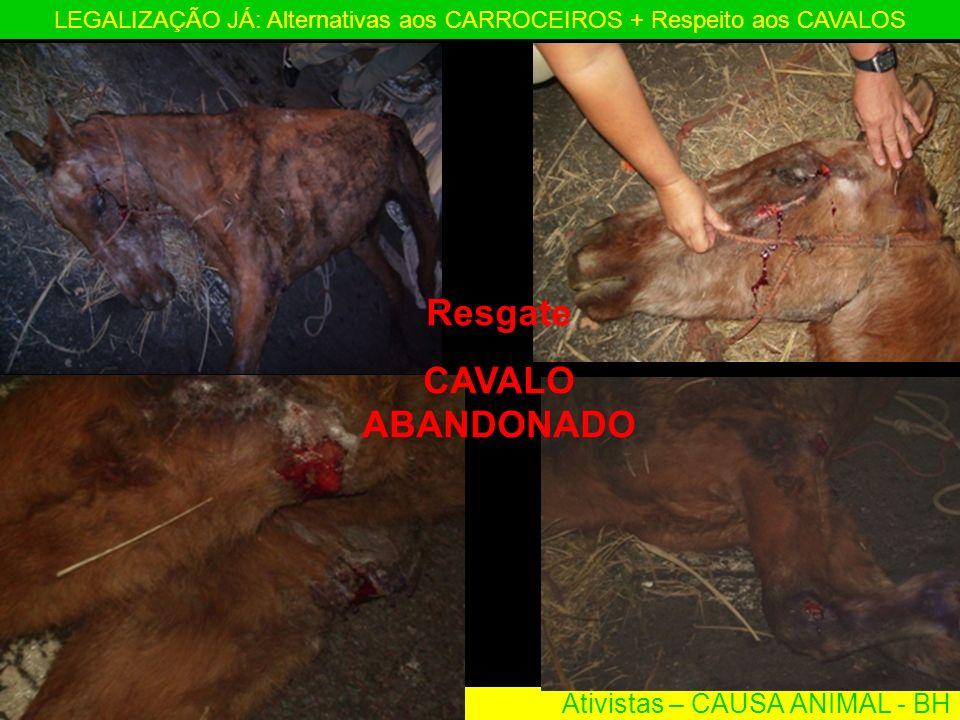 Ativistas – CAUSA ANIMAL - BH LEGALIZAÇÃO JÁ: Alternativas aos CARROCEIROS + Respeito aos CAVALOS Resgate CAVALO ABANDONADO