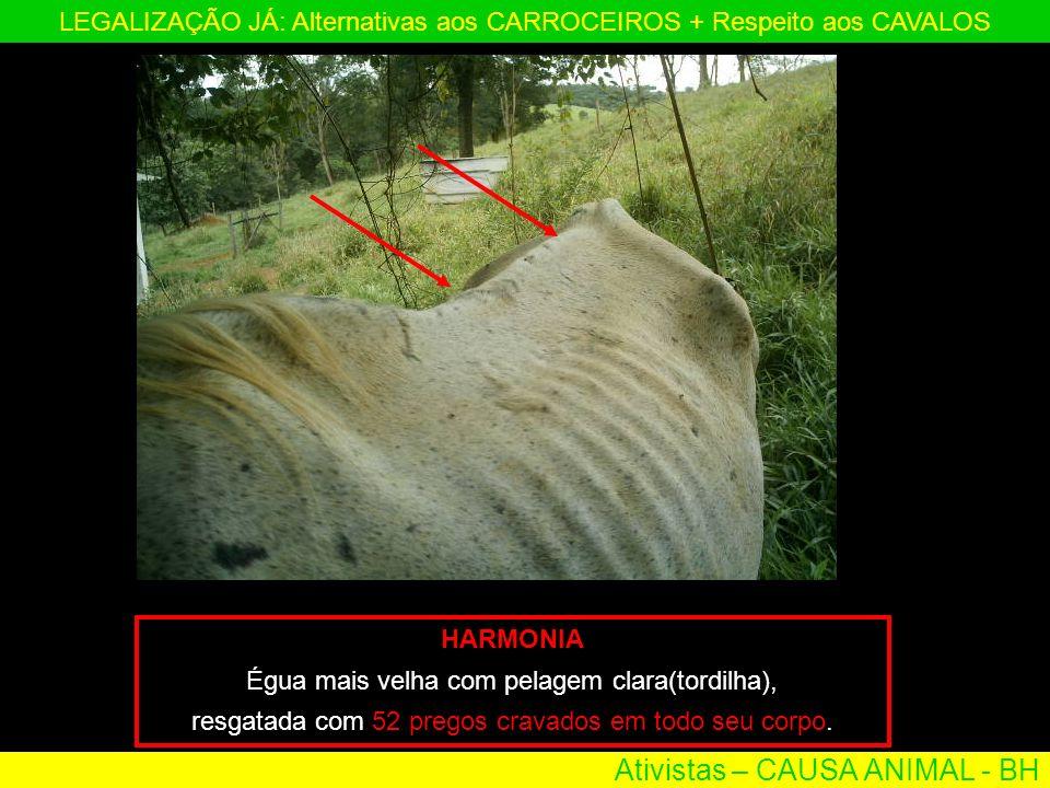 Ativistas – CAUSA ANIMAL - BH LEGALIZAÇÃO JÁ: Alternativas aos CARROCEIROS + Respeito aos CAVALOS HARMONIA Égua mais velha com pelagem clara(tordilha)