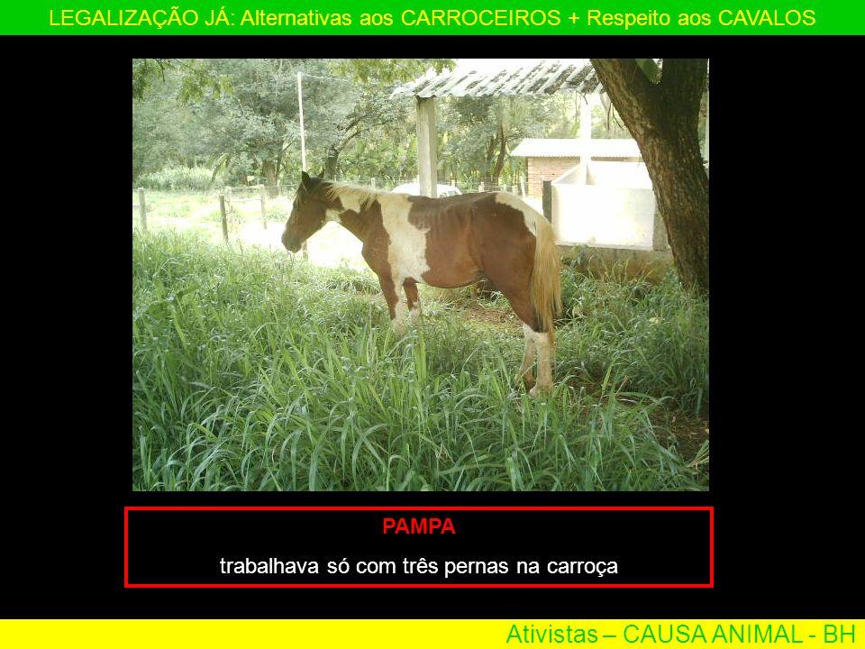 Ativistas – CAUSA ANIMAL - BH LEGALIZAÇÃO JÁ: Alternativas aos CARROCEIROS + Respeito aos CAVALOS PAMPA trabalhava só com três pernas na carroça