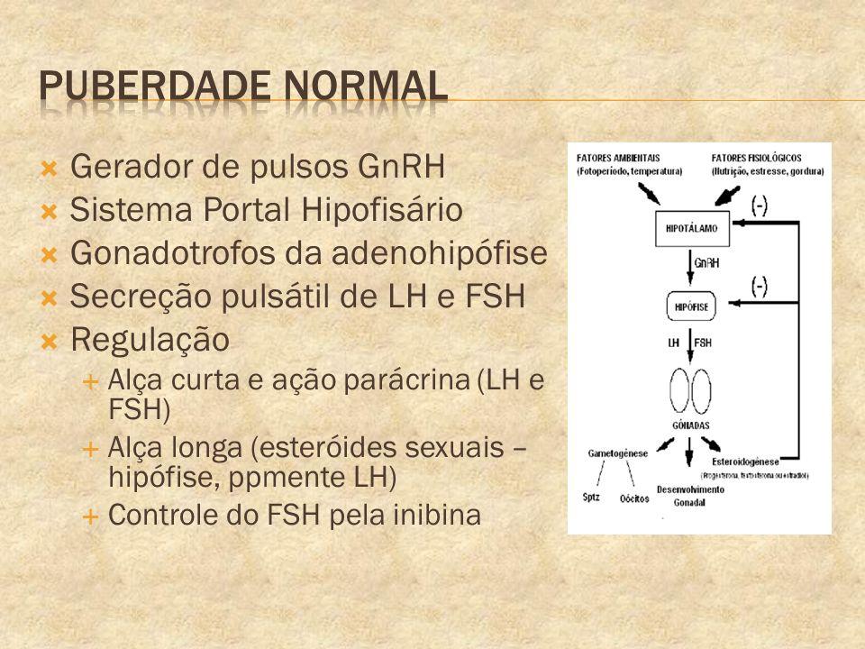 Gerador de pulsos GnRH Sistema Portal Hipofisário Gonadotrofos da adenohipófise Secreção pulsátil de LH e FSH Regulação Alça curta e ação parácrina (L