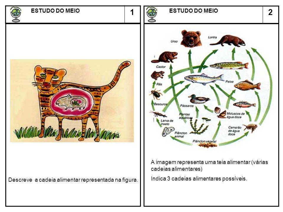 2 ESTUDO DO MEIO ESTUDO DO MEIO 1 Descreve a cadeia alimentar representada na figura. A imagem representa uma teia alimentar (várias cadeias alimentar