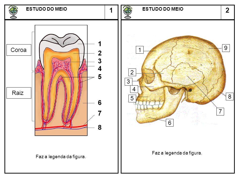 2 ESTUDO DO MEIO ESTUDO DO MEIO 1 AB 1.Completa: A figura A representa a dentição de ________ A figura B representa a dentição __________ 2.Nomeia os vários tipos de dentes.