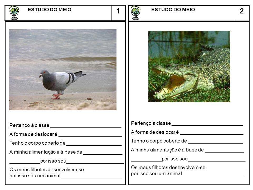 2 ESTUDO DO MEIO ESTUDO DO MEIO 1 Descreve a cadeia alimentar representada na figura.
