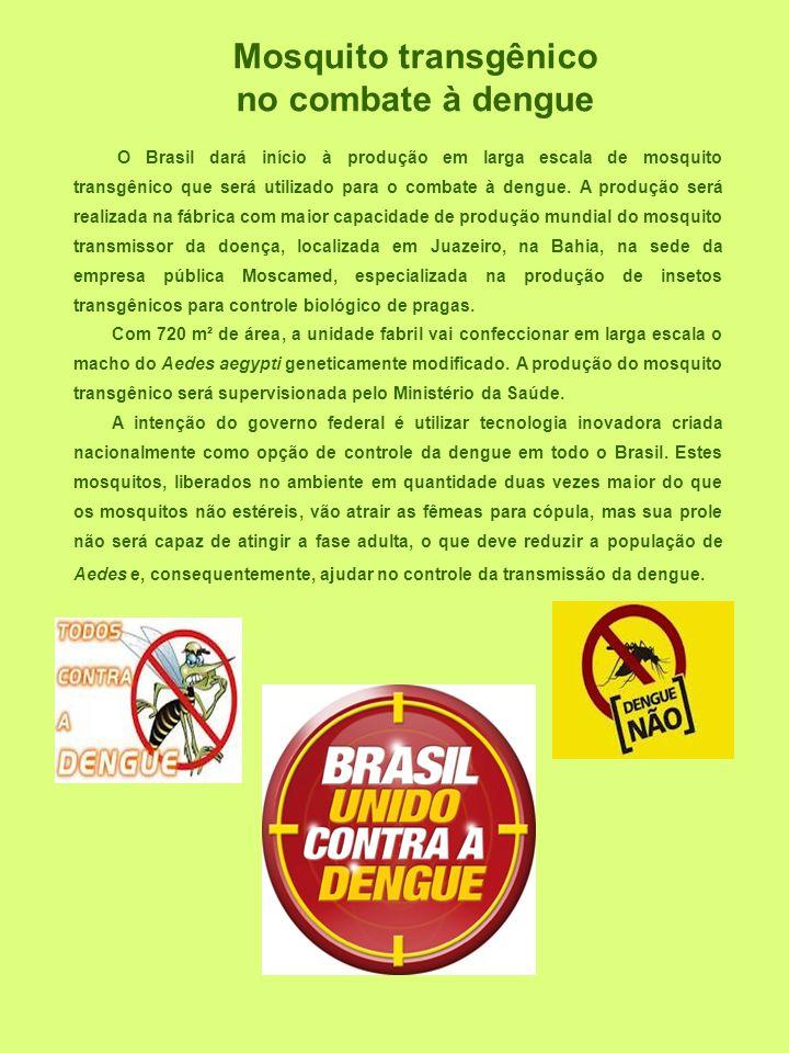 O Brasil dará início à produção em larga escala de mosquito transgênico que será utilizado para o combate à dengue. A produção será realizada na fábri