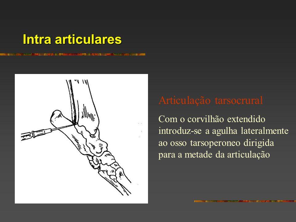 Intra articulares Articulação tarsocrural Com o corvilhão extendido introduz-se a agulha lateralmente ao osso tarsoperoneo dirigida para a metade da a