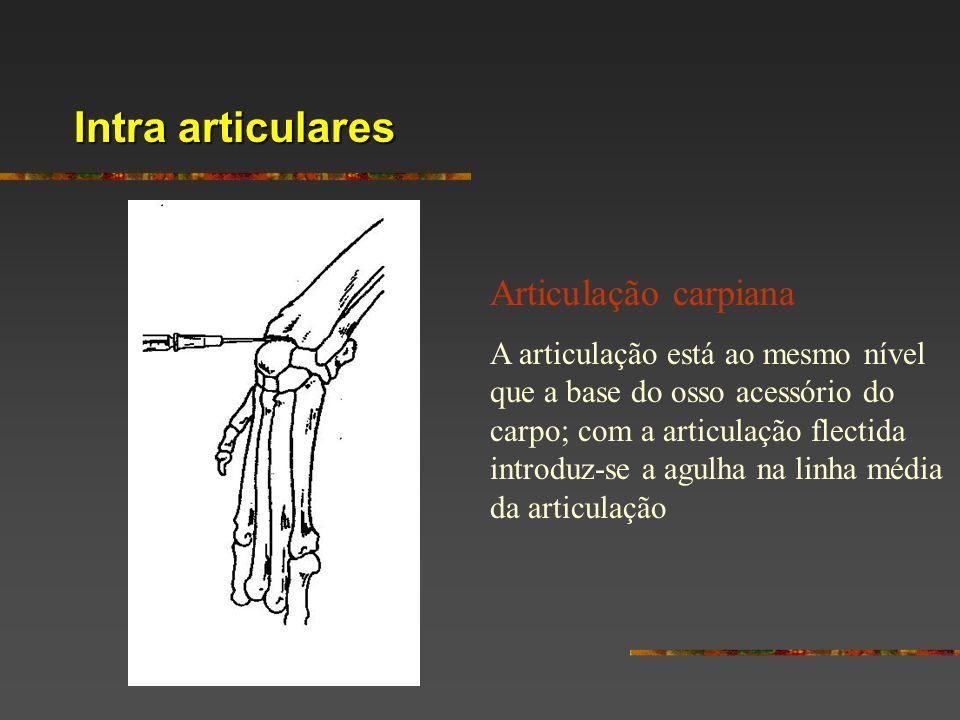 Intra articulares Articulação carpiana A articulação está ao mesmo nível que a base do osso acessório do carpo; com a articulação flectida introduz-se