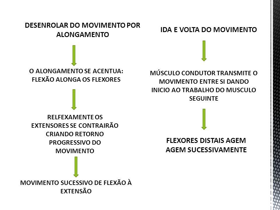 DESENROLAR DO MOVIMENTO POR ALONGAMENTO O ALONGAMENTO SE ACENTUA: FLEXÃO ALONGA OS FLEXORES RELFEXAMENTE OS EXTENSORES SE CONTRAIRÃO CRIANDO RETORNO P