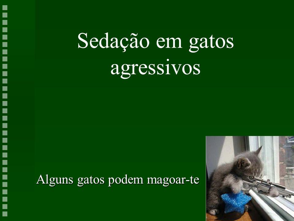 Sedação em gatos agressivos Alguns gatos podem magoar-te