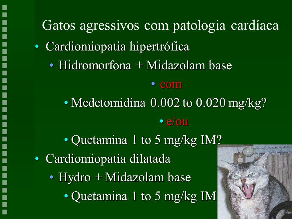Gatos agressivos com patologia cardíaca Cardiomiopatia hipertróficaCardiomiopatia hipertrófica Hidromorfona + Midazolam baseHidromorfona + Midazolam b