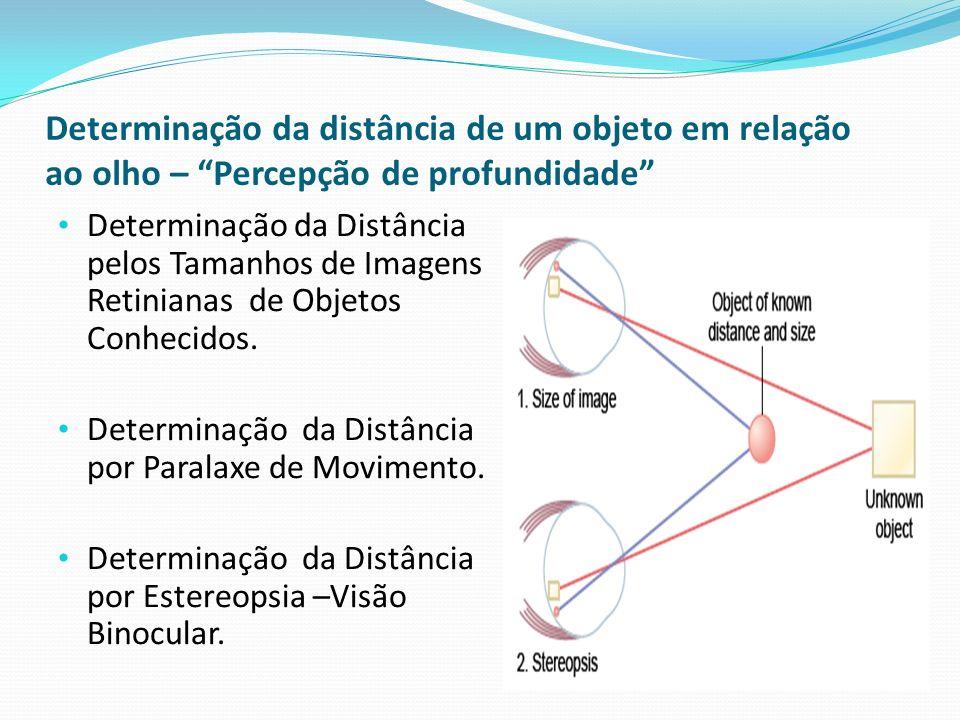 Determinação da distância de um objeto em relação ao olho – Percepção de profundidade Determinação da Distância pelos Tamanhos de Imagens Retinianas d