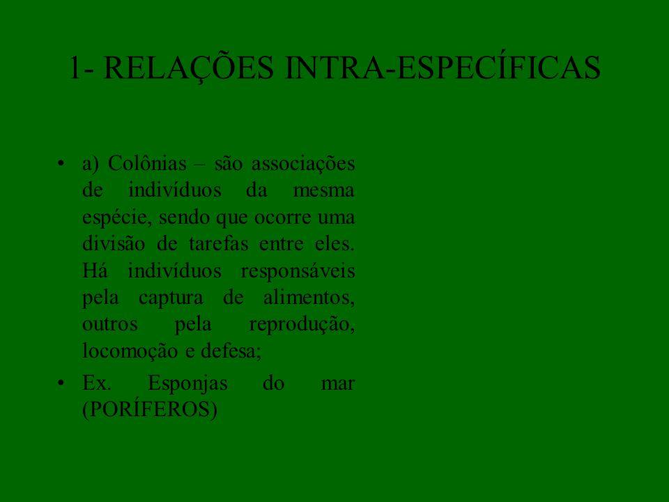 1- RELAÇÕES INTRA-ESPECÍFICAS a) Colônias – são associações de indivíduos da mesma espécie, sendo que ocorre uma divisão de tarefas entre eles. Há ind