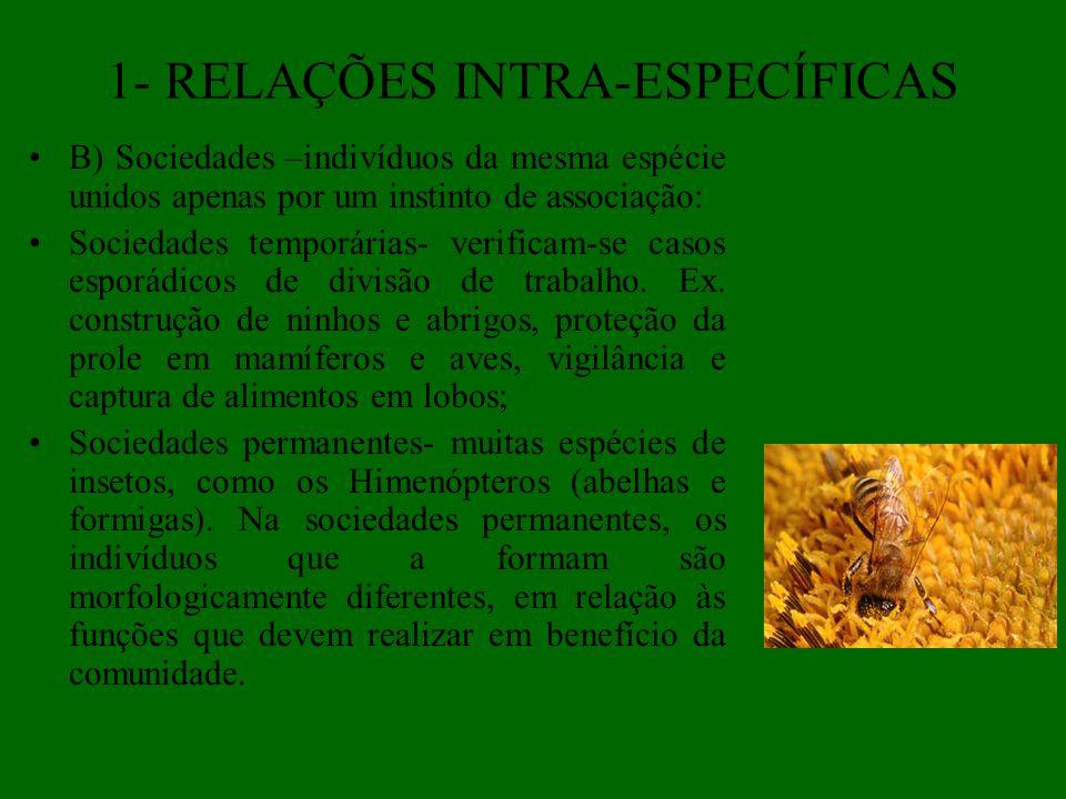 1- RELAÇÕES INTRA-ESPECÍFICAS B) Sociedades –indivíduos da mesma espécie unidos apenas por um instinto de associação: Sociedades temporárias- verifica