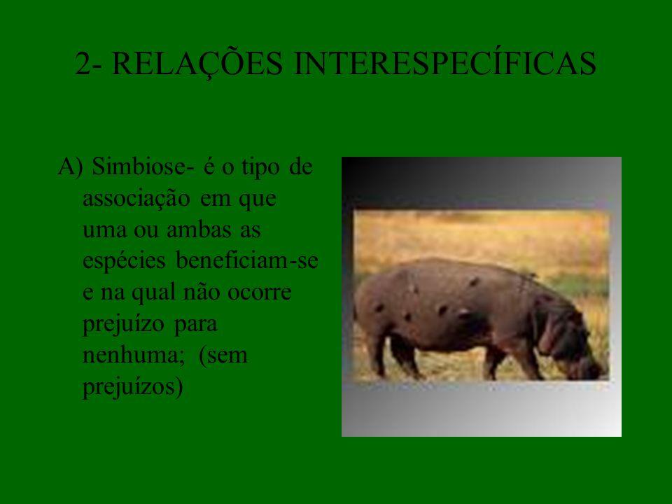 2- RELAÇÕES INTERESPECÍFICAS A) Simbiose- é o tipo de associação em que uma ou ambas as espécies beneficiam-se e na qual não ocorre prejuízo para nenh