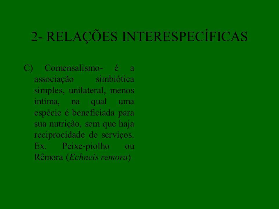 2- RELAÇÕES INTERESPECÍFICAS C) Comensalismo- é a associação simbiótica simples, unilateral, menos intima, na qual uma espécie é beneficiada para sua