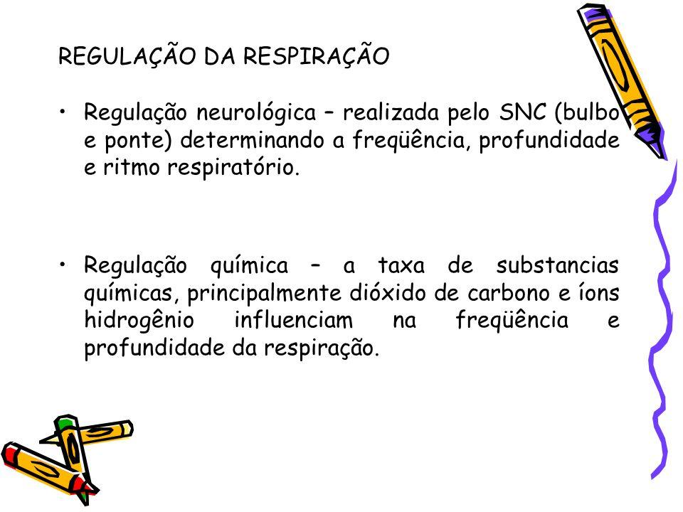 REGULAÇÃO DA RESPIRAÇÃO Regulação neurológica – realizada pelo SNC (bulbo e ponte) determinando a freqüência, profundidade e ritmo respiratório. Regul