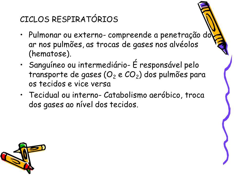 CICLOS RESPIRATÓRIOS Pulmonar ou externo- compreende a penetração do ar nos pulmões, as trocas de gases nos alvéolos (hematose). Sanguíneo ou intermed