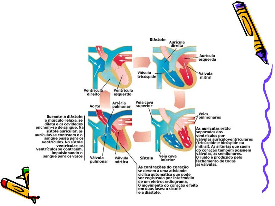 CICLOS RESPIRATÓRIOS Pulmonar ou externo- compreende a penetração do ar nos pulmões, as trocas de gases nos alvéolos (hematose).