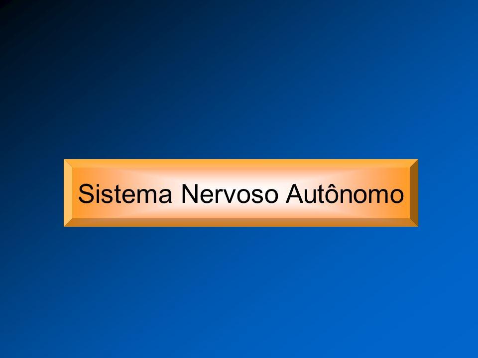 Sistema Nervoso Sistema Nervoso Periférico Sistema Nervoso Central Divisão Eferente Divisão Aferente Sistema Nervoso Autônomo Sistema Nervoso Somático ParassimpáticoSimpático Entérico