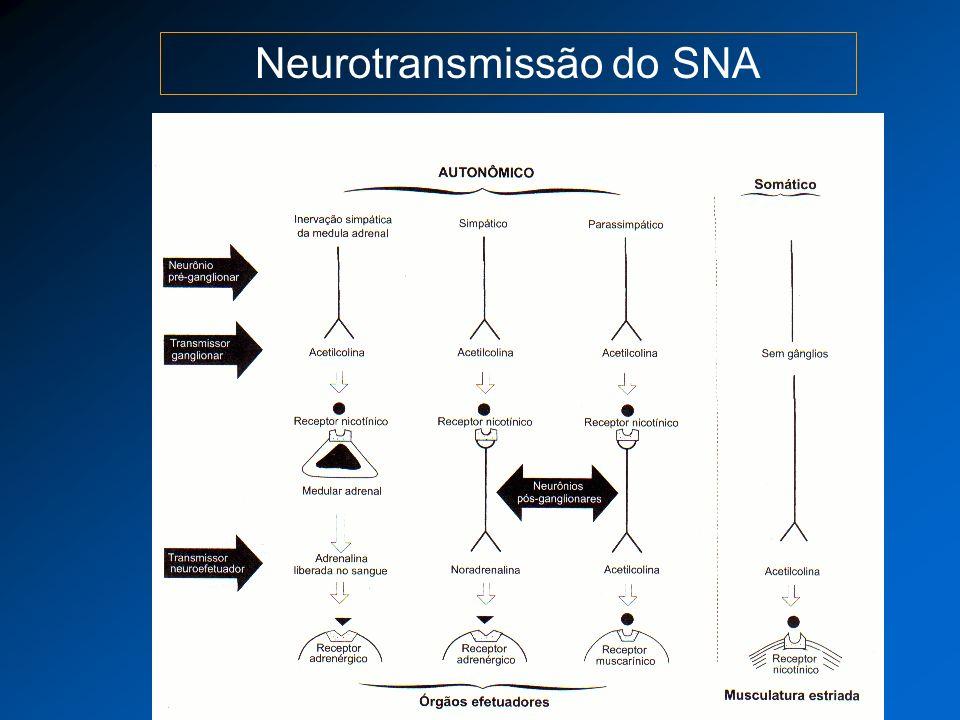 Neurotransmissão do SNA