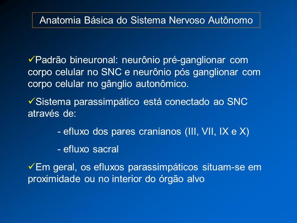 Anatomia Básica do Sistema Nervoso Autônomo Padrão bineuronal: neurônio pré-ganglionar com corpo celular no SNC e neurônio pós ganglionar com corpo ce