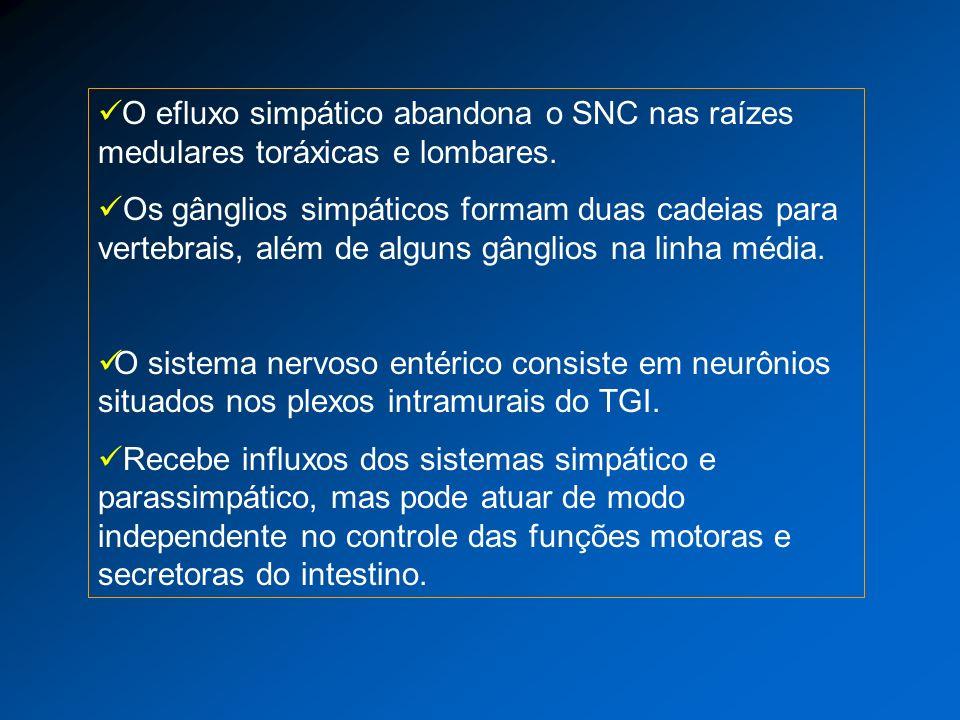 O efluxo simpático abandona o SNC nas raízes medulares toráxicas e lombares. Os gânglios simpáticos formam duas cadeias para vertebrais, além de algun