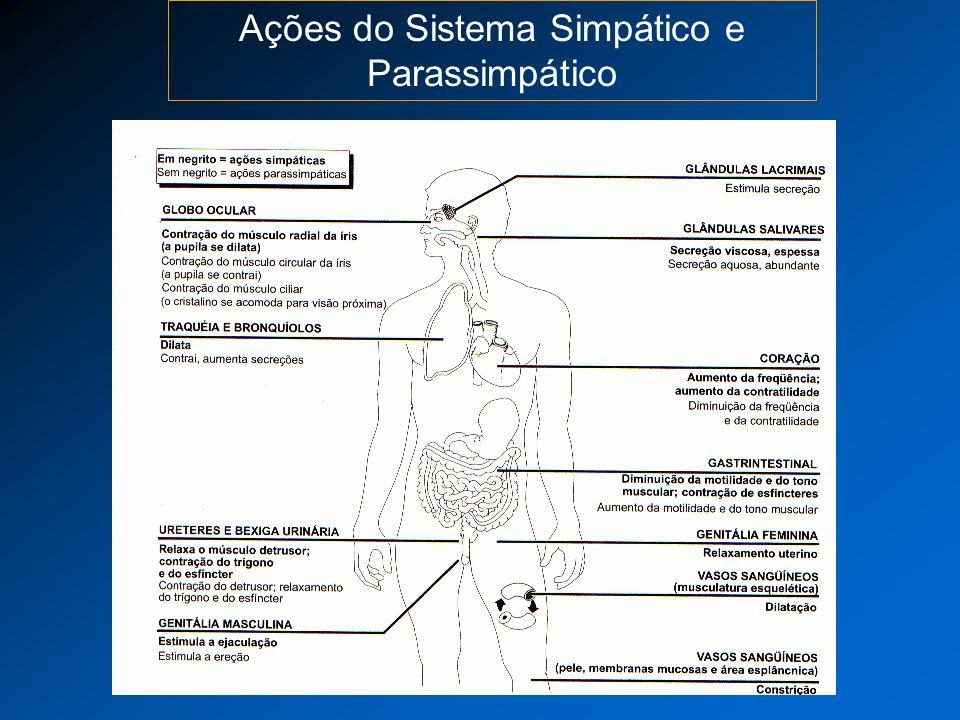 Neurotransmissão do SNA Os principais neurotransmissores são acetilcolina e noradrenalina.