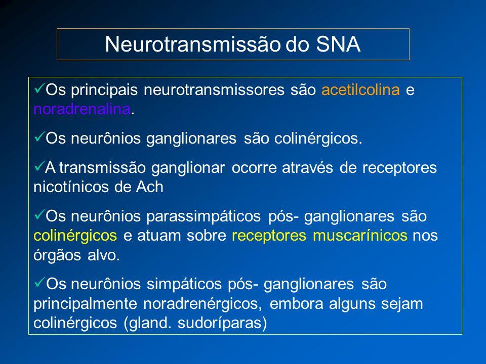 Neurotransmissão do SNA Os principais neurotransmissores são acetilcolina e noradrenalina. Os neurônios ganglionares são colinérgicos. A transmissão g