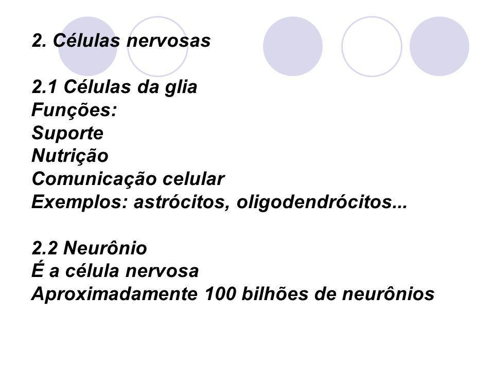 2. Células nervosas 2.1 Células da glia Funções: Suporte Nutrição Comunicação celular Exemplos: astrócitos, oligodendrócitos... 2.2 Neurônio É a célul