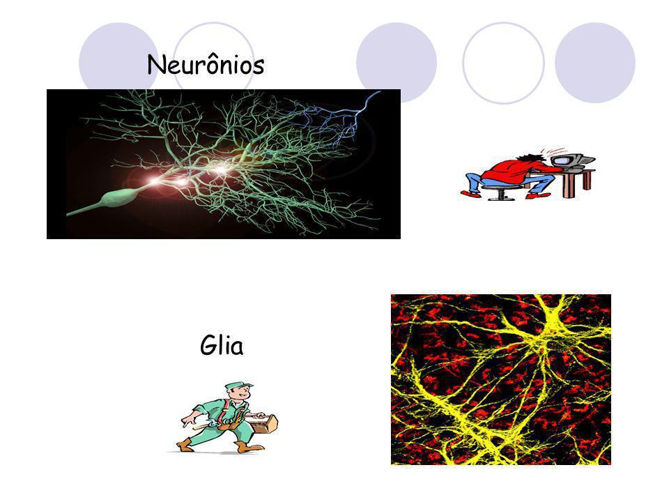 Neurônios Glia