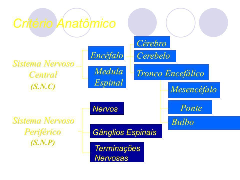 Critério Anatômico Sistema Nervoso Central Central Sistema Nervoso Periférico Periférico Medula Espinal Encéfalo Nervos Gânglios Espinais Cérebro Cere