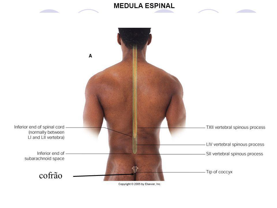 cofrão MEDULA ESPINAL