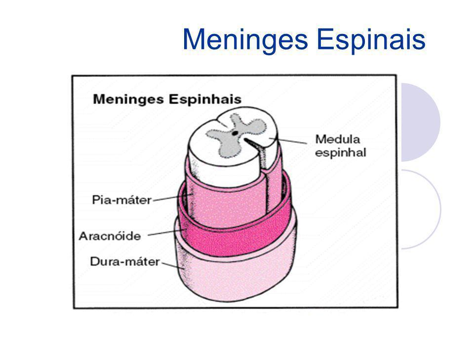 Meninges Espinais