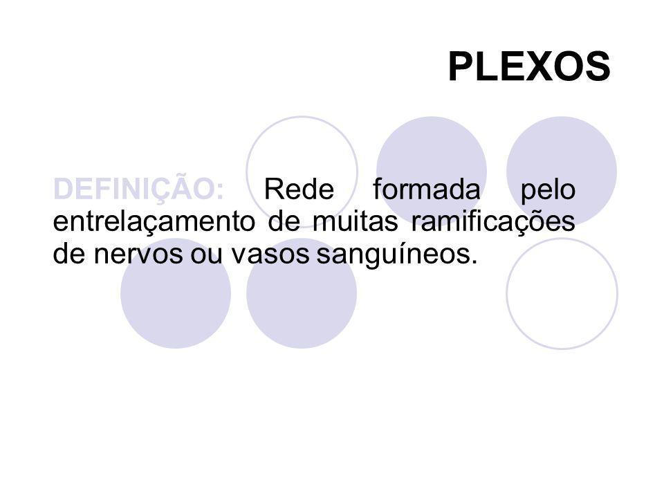 DEFINIÇÃO: Rede formada pelo entrelaçamento de muitas ramificações de nervos ou vasos sanguíneos. PLEXOS