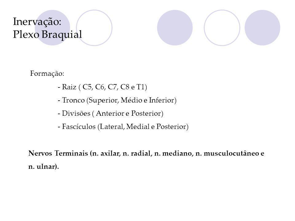 Inervação: Plexo Braquial Formação: - Raiz ( C5, C6, C7, C8 e T1) - Tronco (Superior, Médio e Inferior) - Divisões ( Anterior e Posterior) - Fascículo