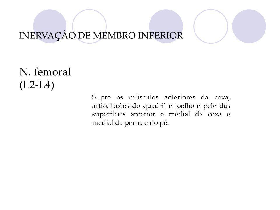 N. femoral (L2-L4) Supre os músculos anteriores da coxa, articulações do quadril e joelho e pele das superfícies anterior e medial da coxa e medial da