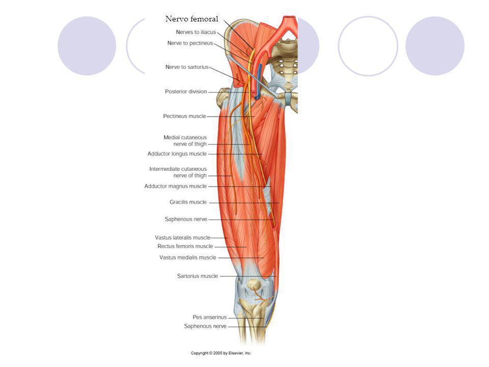 Nervo femoral