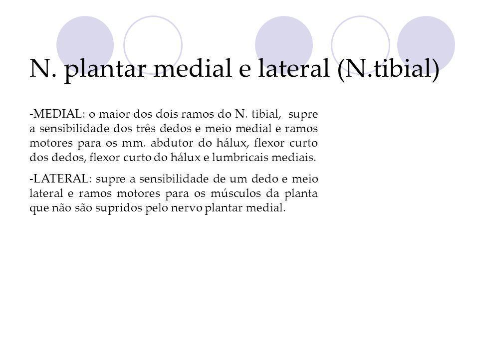 N. plantar medial e lateral (N.tibial) -MEDIAL: o maior dos dois ramos do N. tibial, supre a sensibilidade dos três dedos e meio medial e ramos motore