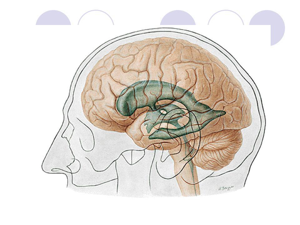 Classificação Funcional Sensitivos ou sensoriais – receptores de estímulos Motores – órgãos efetores, como músculos e glândulas Associativos ou interneurônios – codificação ABCABC