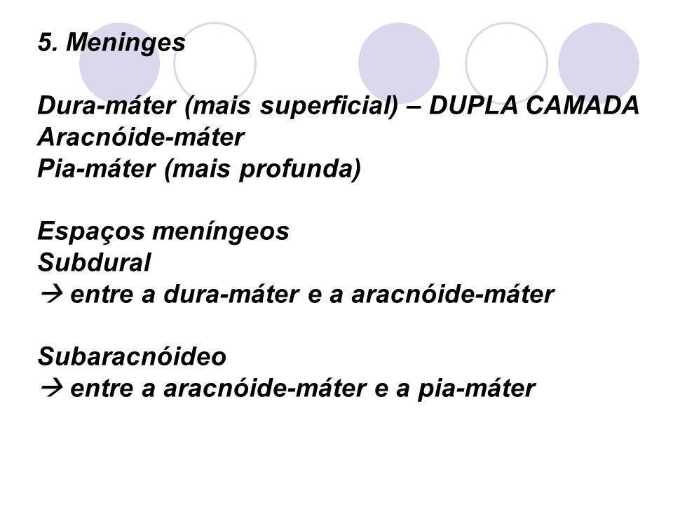 5. Meninges Dura-máter (mais superficial) – DUPLA CAMADA Aracnóide-máter Pia-máter (mais profunda) Espaços meníngeos Subdural entre a dura-máter e a a