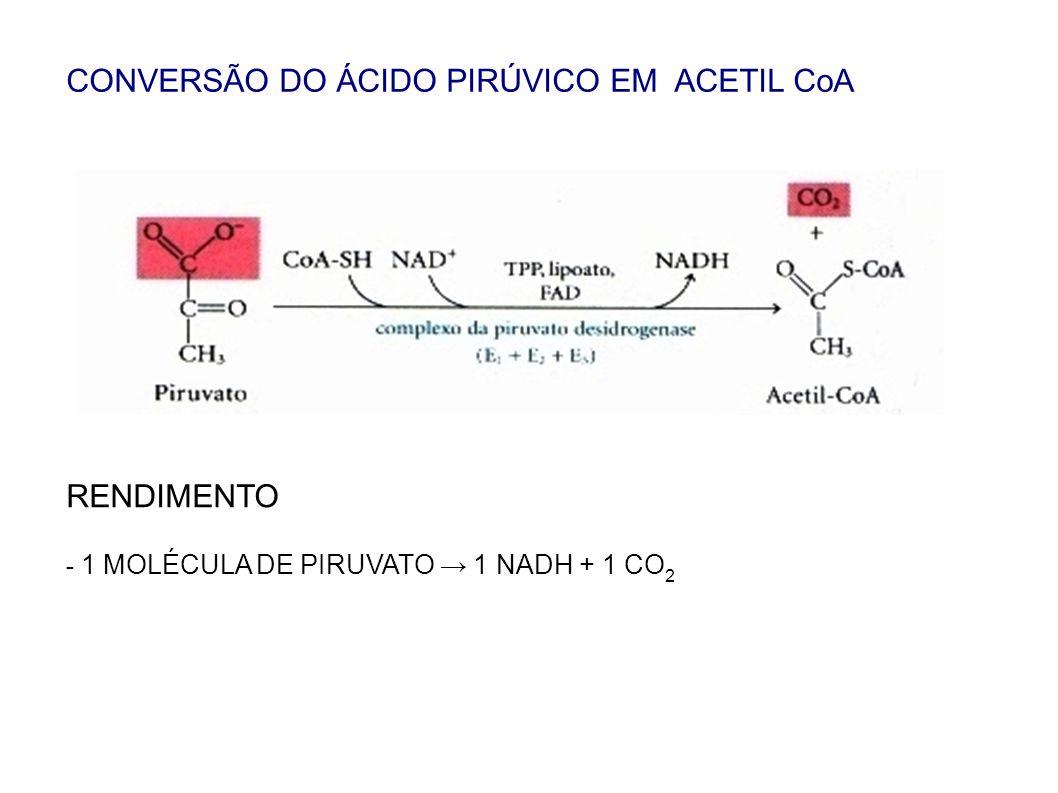 CONVERSÃO DO ÁCIDO PIRÚVICO EM ACETIL CoA RENDIMENTO - 1 MOLÉCULA DE PIRUVATO 1 NADH + 1 CO 2
