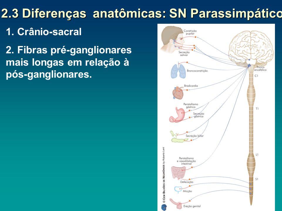 2.3 Diferenças anatômicas: SN Parassimpático 2.3 Diferenças anatômicas: SN Parassimpático 1. Crânio-sacral 2. Fibras pré-ganglionares mais longas em r