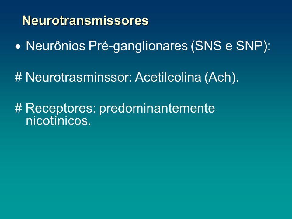 Neurônios Pré-ganglionares (SNS e SNP): # Neurotrasminssor: Acetilcolina (Ach). # Receptores: predominantemente nicotínicos. Neurotransmissores Neurot