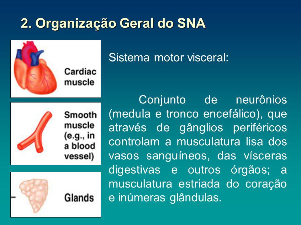 2.1 Diferença entre SNA e motor somático Sinapse periférica